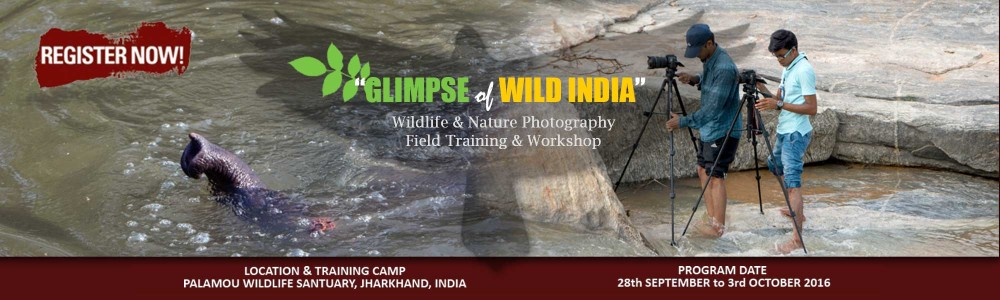 iidaa-photography-go-wild-upcoming-event